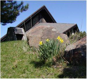 Daffodils - bell garden-1