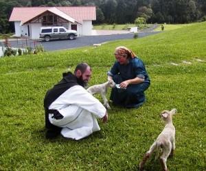 "Newborn twin lambs ""Jacob and Esau"" (!)"